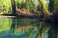 Tannen und kleiner See Stockbild