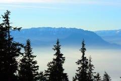 Tannenbäume über einem nebeligen Tal Lizenzfreie Stockfotografie