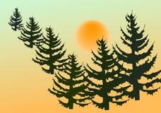 Tannenbäume Lizenzfreie Stockfotografie