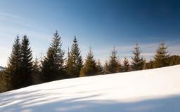 Tannenbäume lizenzfreie stockfotos
