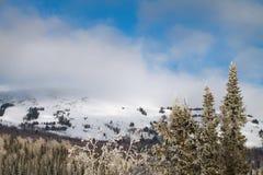 Tannenbäume auf dem Berg Lizenzfreie Stockfotografie