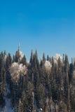 Tannenbäume auf dem Berg lizenzfreie stockbilder