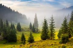Tannenbäume auf Wiese zwischen Abhängen im Nebel vor Sonnenaufgang Lizenzfreies Stockbild