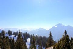 Tannenbäume in der bayerischen Alpe Stockbild