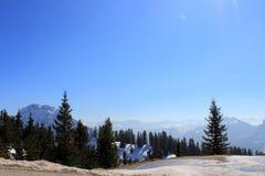 Tannenbäume in der bayerischen Alpe Lizenzfreie Stockfotos