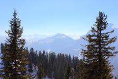 Tannenbäume in der bayerischen Alpe Stockfoto