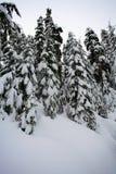 Tannenbäume mit Schnee Stockbild