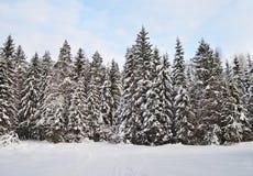 Tannenbäume mit Schnee im Winterwald Stockbilder