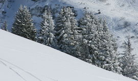 Tannenbäume unter Schnee Lizenzfreie Stockbilder