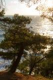 Tannenbäume wachsen auf dem Strand vertikal Lizenzfreie Stockfotografie