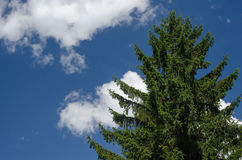 Tannenbaum Stockfoto