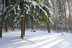 Tannenbaum abgedeckt mit Schnee Lizenzfreies Stockfoto