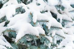Tannenbaum abgedeckt mit Schnee Stockbild