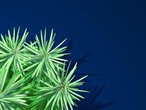Tannenbaum auf blauem Hintergrund Stockfoto