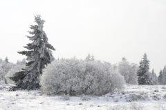 Tannenbaum auf einer schneebedeckten Waldlichtung Stockbilder