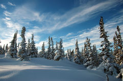 Tannenbaum bedeckt mit Frost und Schnee Lizenzfreie Stockfotos