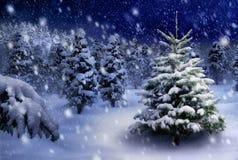 Tannenbaum in der schneebedeckten Nacht Stockbilder
