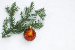 Tannenbaum ein Niederlassungsgrün Lizenzfreies Stockbild