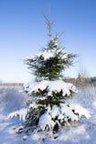 Tannenbaum im Schnee Stockfotos
