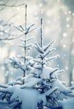 Tannenbaum im Schnee lizenzfreie stockbilder