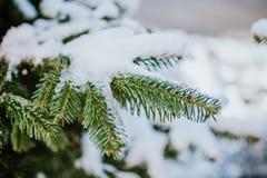 Tannenbaum im Winter lizenzfreies stockbild