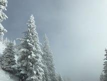 Tannenbaum im Winter - künstlerisches Trieb Lizenzfreie Stockfotos
