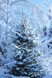 Tannenbaum im Winterwald Stockfotografie