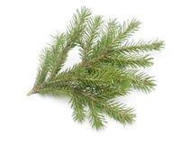 Tannenbaum lokalisiert auf Weiß Lizenzfreies Stockfoto