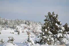 Tannenbaum mit einer Schneekappe im Winter Stockbilder