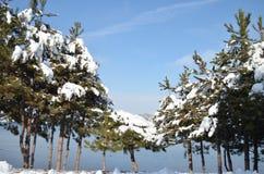 Tannenbaum mit einer Schneekappe im Winter Lizenzfreie Stockfotografie