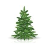 Tannenbaum mit grünen Niederlassungen Stockfotos