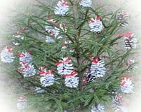 Tannenbaum mit weißen Kegeln Stockfotografie