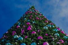 Tannenbaum oben Stockfotografie
