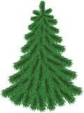Tannenbaum ohne Weihnachtsdekorationen Stockbilder