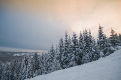 Tannenbaum unter Schnee Stockfotos