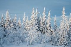 Tannenbaum unter Schnee Stockfotografie