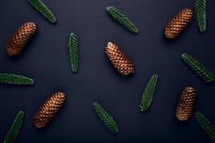 Tannenbaumaste mit Fichten stockfotos