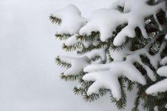 Tannenbaumaste umfasst mit Schnee Stockbilder