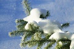 Tannenbaumgrün im Schneeglanz auf der Sonne Stockbilder