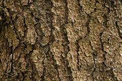Tannenbaumrinde mit großen Sprüngen Stockfotografie