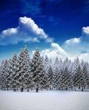 Tannenbaumwald in der schneebedeckten Landschaft Lizenzfreies Stockfoto