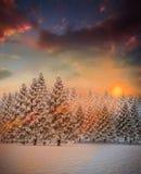 Tannenbaumwald in der schneebedeckten Landschaft Lizenzfreie Stockfotos