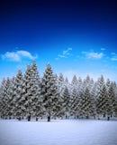 Tannenbaumwald in der schneebedeckten Landschaft Stockbild