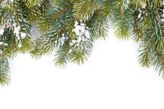 Tannenbaumzweig umfaßt mit Schnee Stockbilder