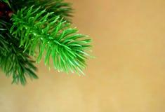 Tannenbaumzweige auf einem Kraftpapier Lizenzfreie Stockfotos