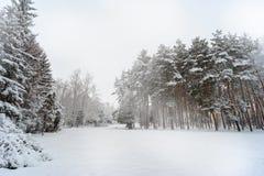 Tannenbäume unter dem Schnee Lizenzfreies Stockbild