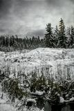 Tannenwald nach Zauberer im Winter stockfotografie