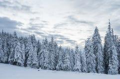 Tannenwaldwinter Stockfotografie