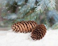 Tannenzapfen liegen auf Schnee unter der Tanne, die mit Schnee besprüht wird Lizenzfreies Stockfoto