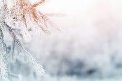 Tannenzweig im Hoarfrost auf kaltem Morgen stockbild